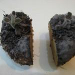 Деление клубня глоксинии