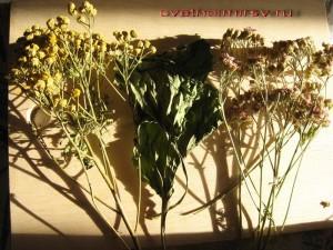 Из лекарственных растений