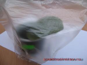 Лист фиалки под мешком