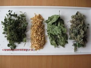 Заготовка растений
