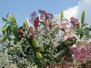 Флора2012-10