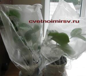 Сохранить растения
